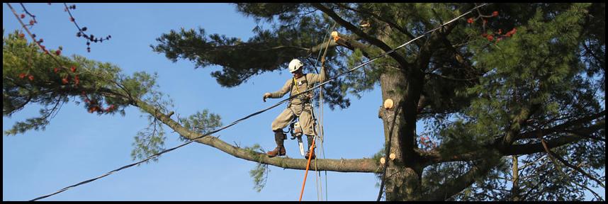 Cut Above Tree Service