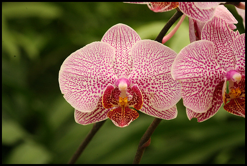 Different Kinds Of Orchids
