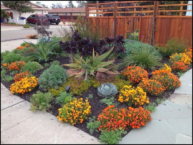 Drought Tolerant Plants Landscape Design
