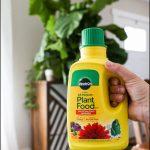Fertilizer For Fig Trees