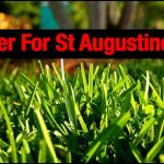 Fertilizer For St Augustine