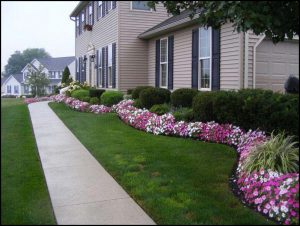 Front Yard Landscaping Plants And Shrubs