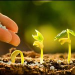 How Does Fertilizer Affect Plant Growth