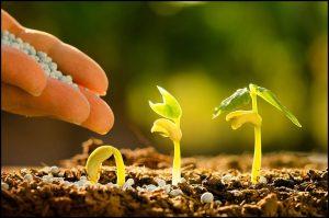 How Does Fertilizer Affect Plant Growth