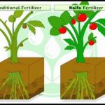 How Does Fertilizer Work