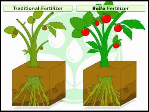 How Does Fertilizer Work