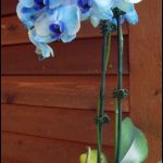 How Much Are Orchids