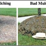 How Much Is Mulch
