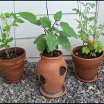 How Much Potting Soil Do I Need