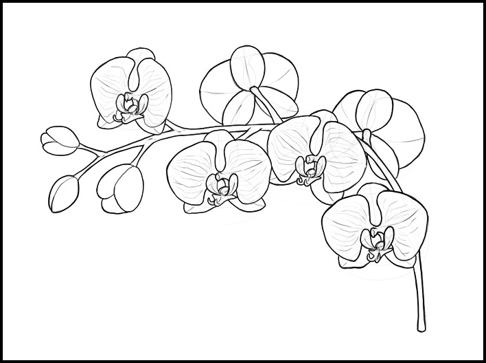 How To Draw A Orchid