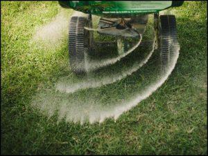 How To Fertilize Grass