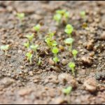How To Plant Succulent Seeds