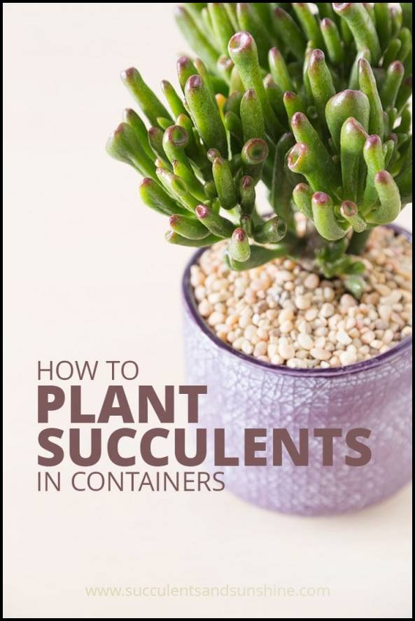 How To Pot Succulents