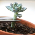 How To Replant Succulents