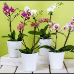 How To Take Care Of A Orchid