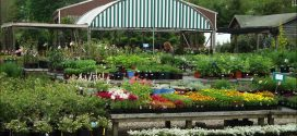 Landscape Nurseries Near Me
