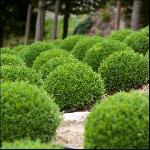 Low Maintenance Shrubs For Landscaping