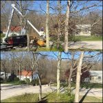 Mike's Tree Service Ri