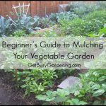 Mulch For Vegetable Garden
