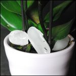 Orchid Care Ice Cube