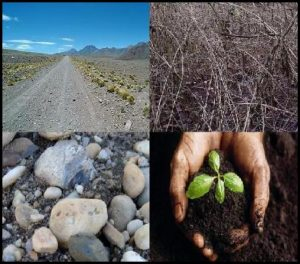 Parable Of The Soils