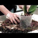 Potting Soil For Orchids
