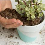 Potting Soil For Succulents