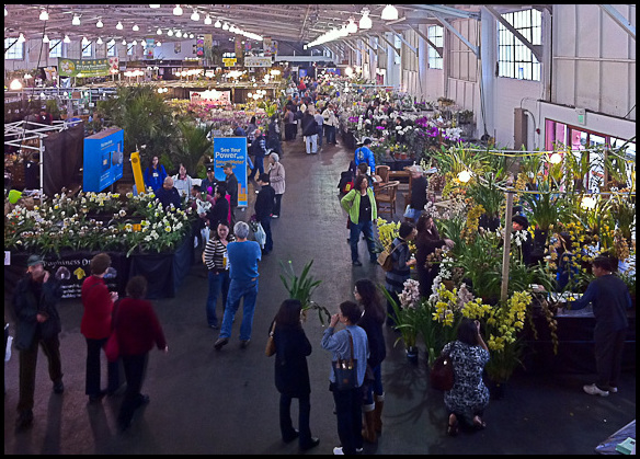 San Francisco Orchid Show