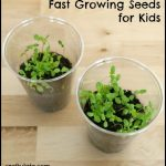 Seeds That Grow Fast