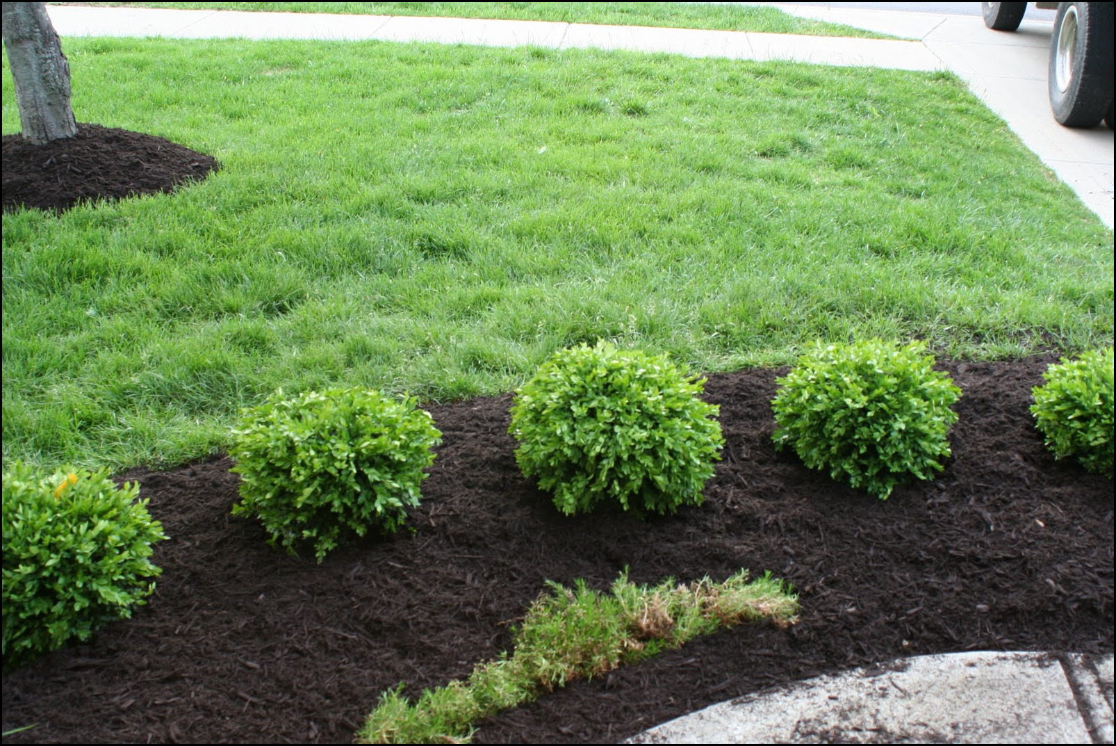Small Bushes For Landscaping