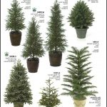 Small Evergreen Trees For Landscaping