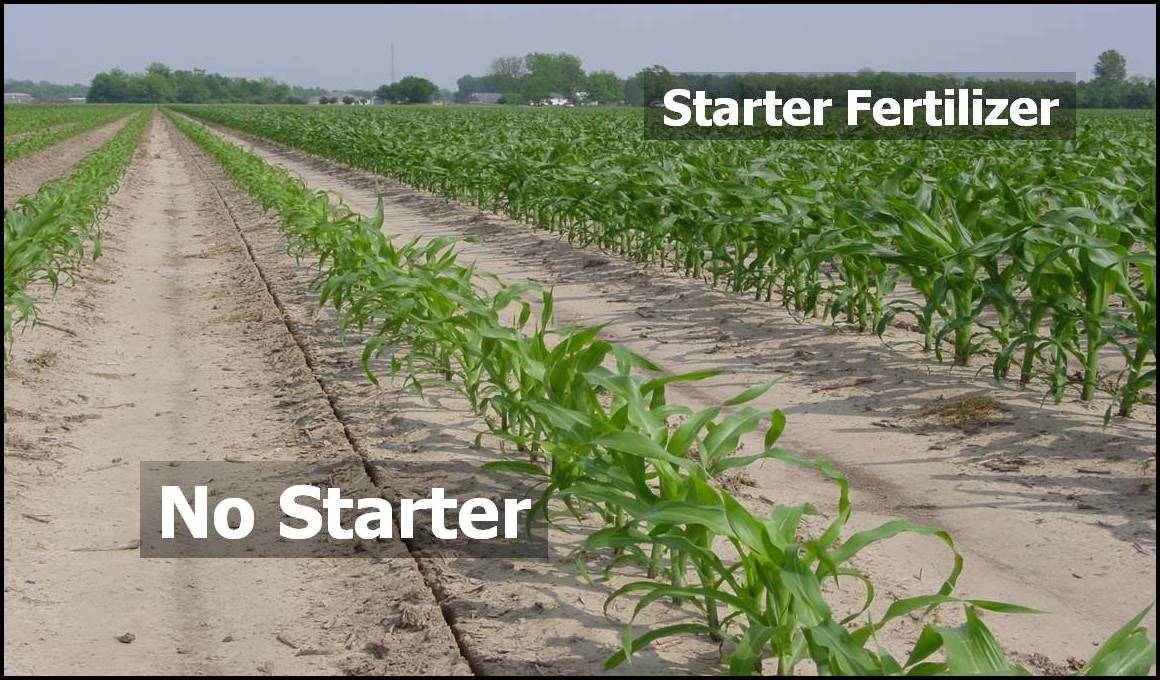 Starter Fertilizer For Corn