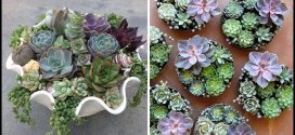 Taking Care Of Succulents