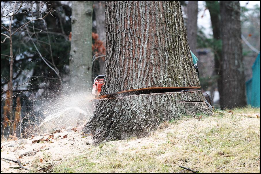 Tree Service Fort Wayne