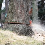 Tree Service Fort Wayne