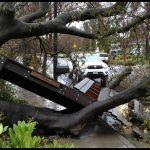 Tree Service Tampa Fl