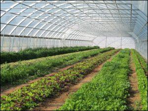 Vegetable Greenhouse