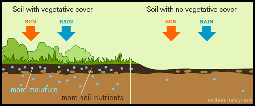 What Is Soil Conservation