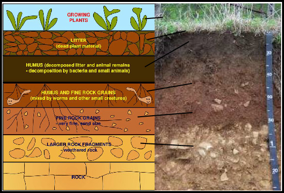 What Is Top Soil