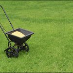 When To Apply Lawn Fertilizer