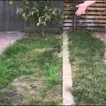 When To Fertilize Bermuda Grass