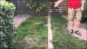 When To Fertilize Bermuda Grass
