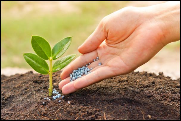 When To Fertilize Garden