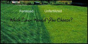 When To Fertilize New Sod