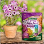 When To Fertilize Orchids