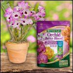 When To Fertilize Orchids