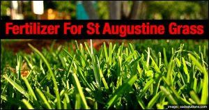 When To Fertilize St Augustine Grass