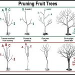 When To Prune Apple Trees