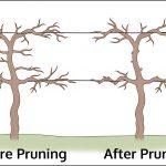 When To Prune Grape Vines