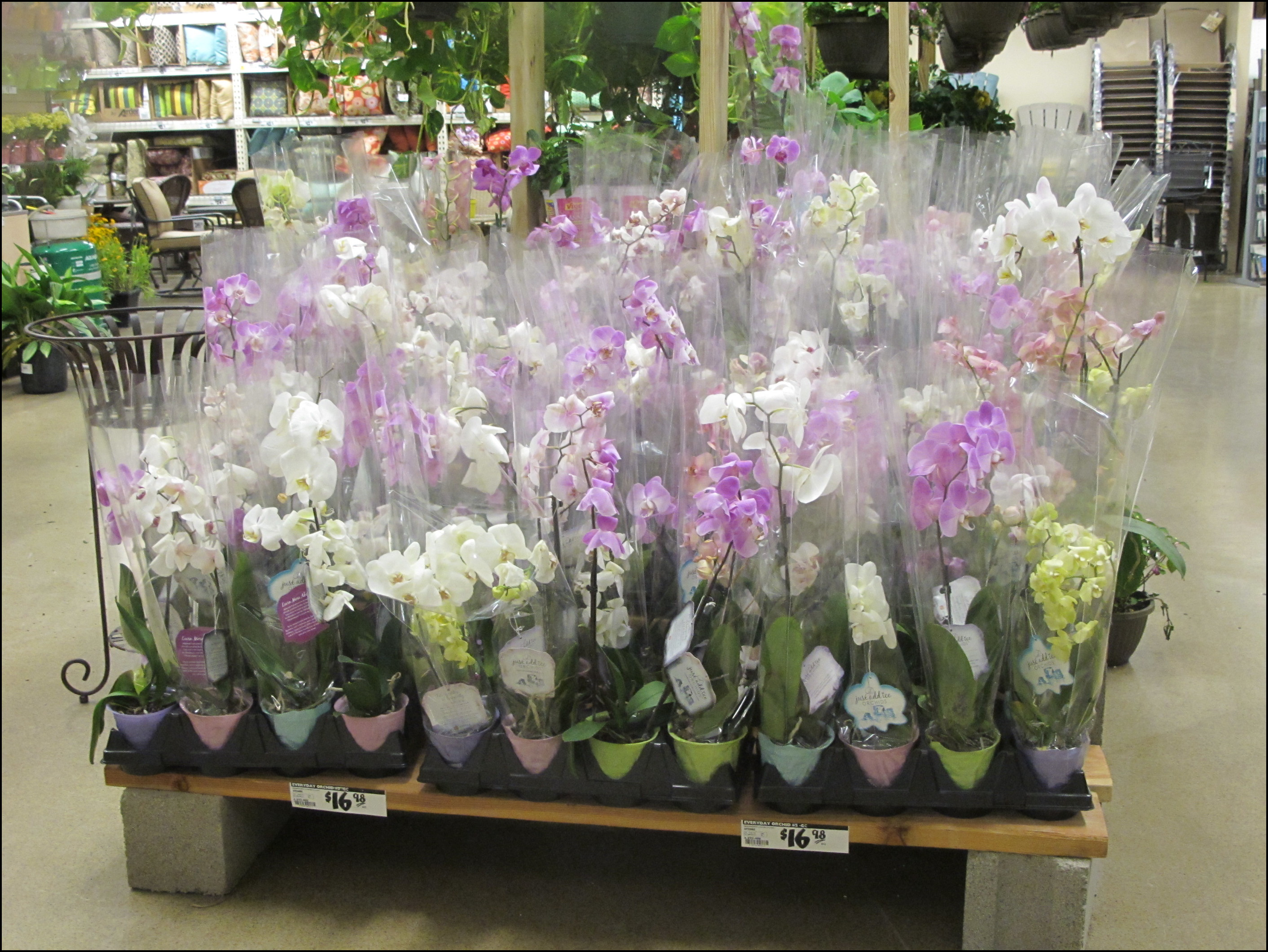 Where To Buy Orchids